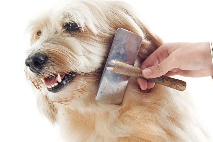 Resultado de imagem para escovação cachorro