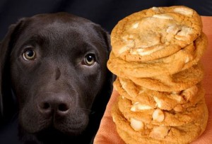 alimentos que você não deve dar para o seu cachorro