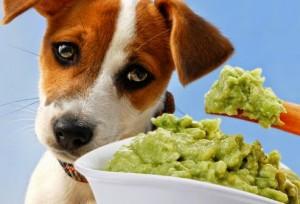 alimentos que voc no deve dar para o seu cachorro